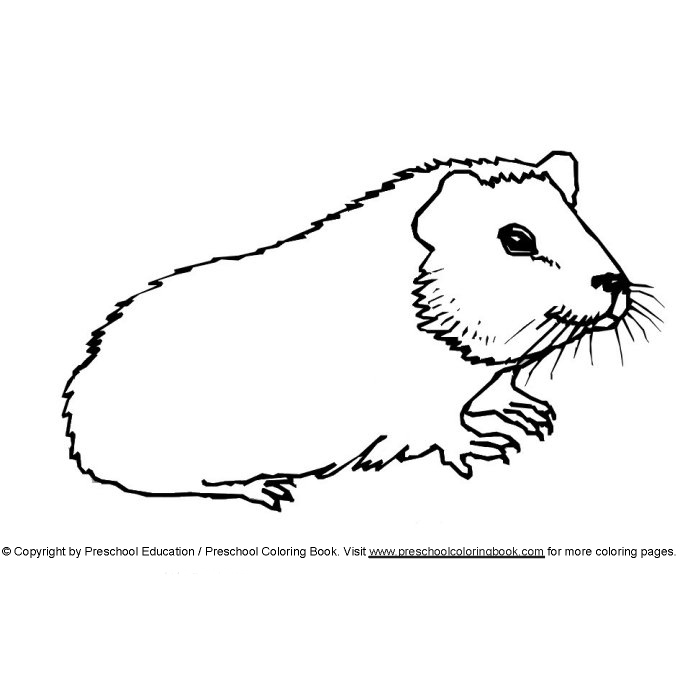 Free Coloring Pages Of Guinea Pig Guinea Pig Coloring Pages