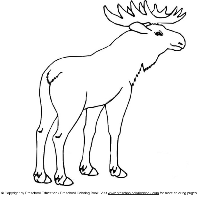 coloring pages manitoba moose - photo#19